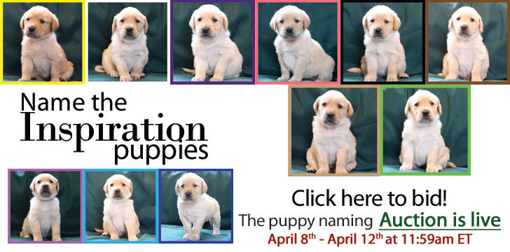 Name the Inspiration Puppys