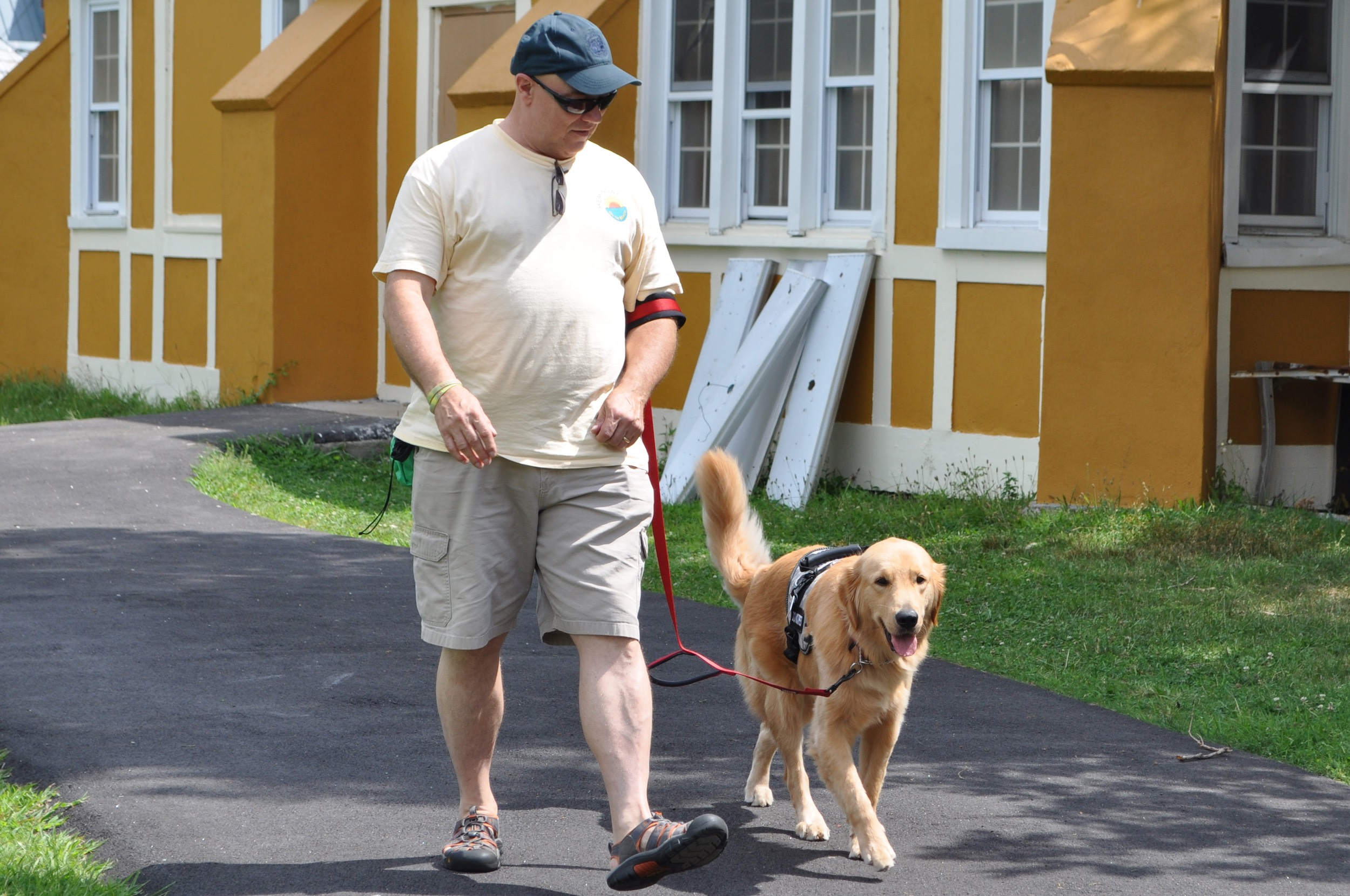 PTSD Service Dog for Veterans Walking
