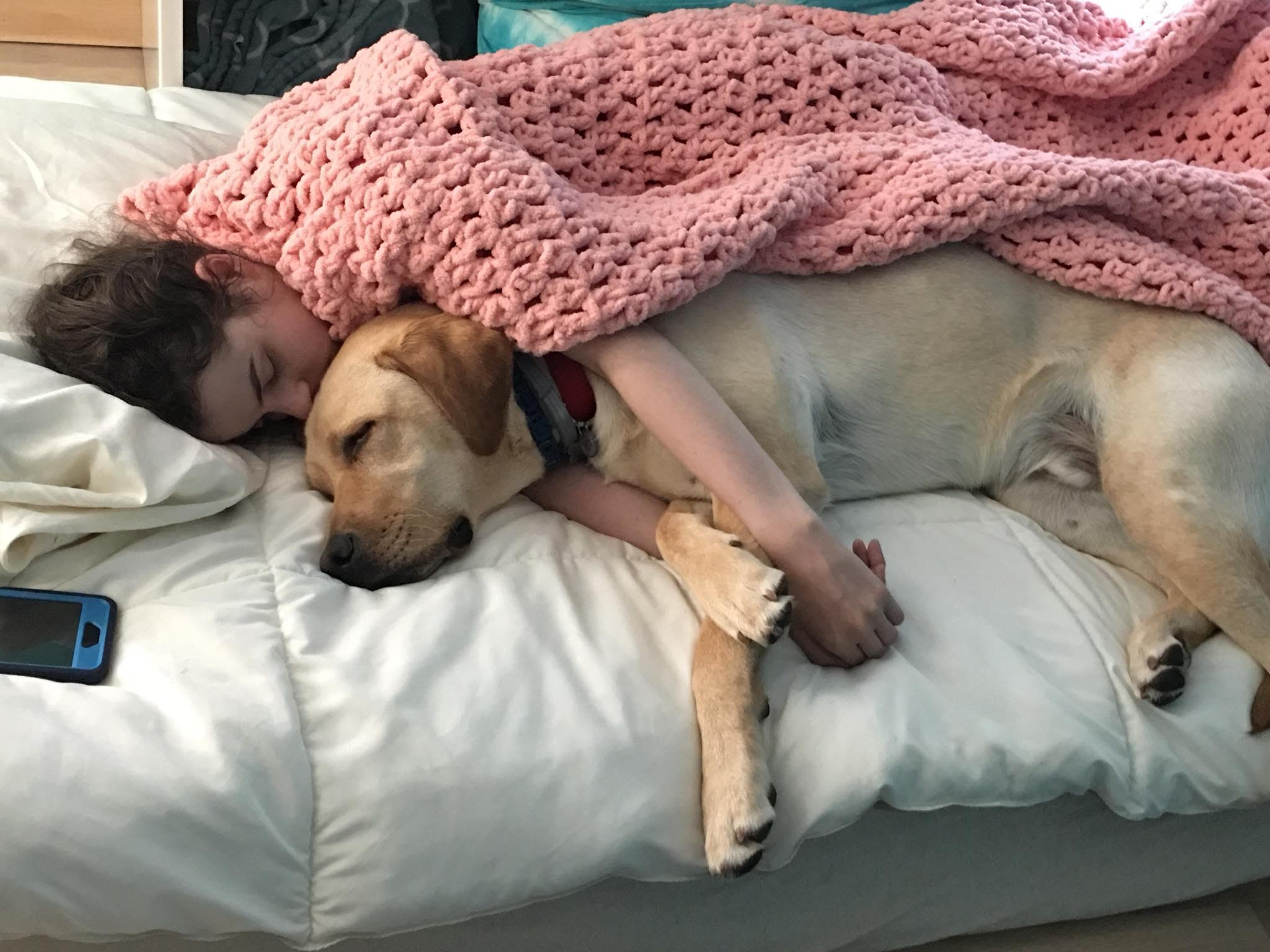 Volunteer dog sitting weekend with service dog