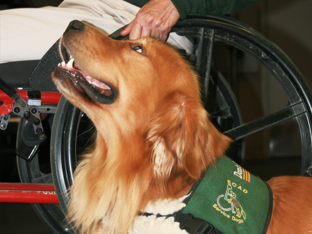 ecad accredidation service dogs