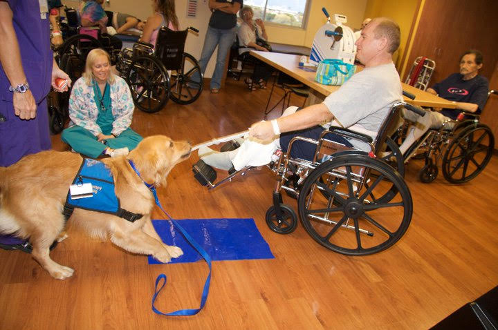 ecad facility dog wheelchair