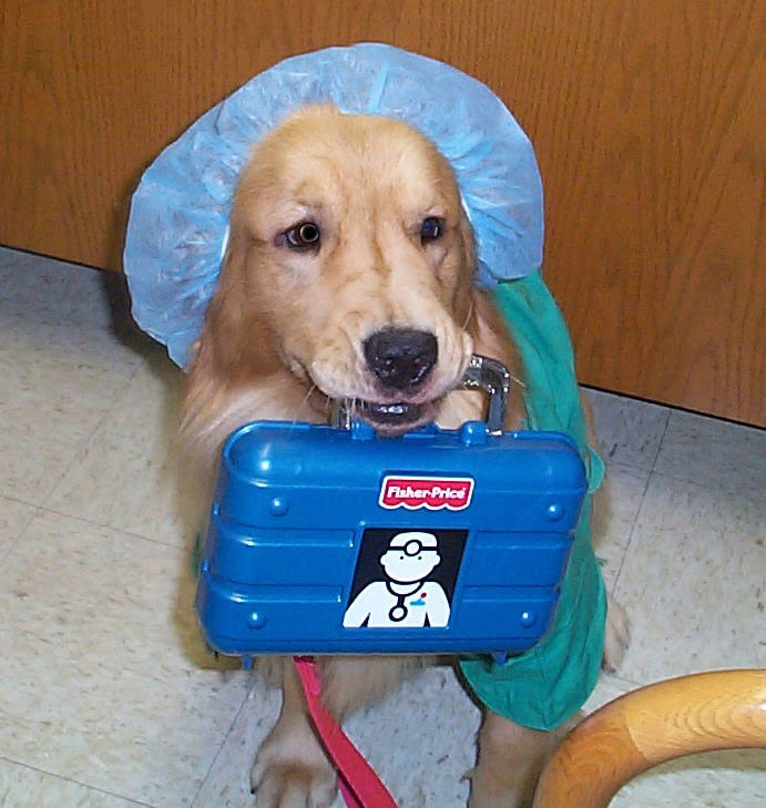 healthcare facility dog