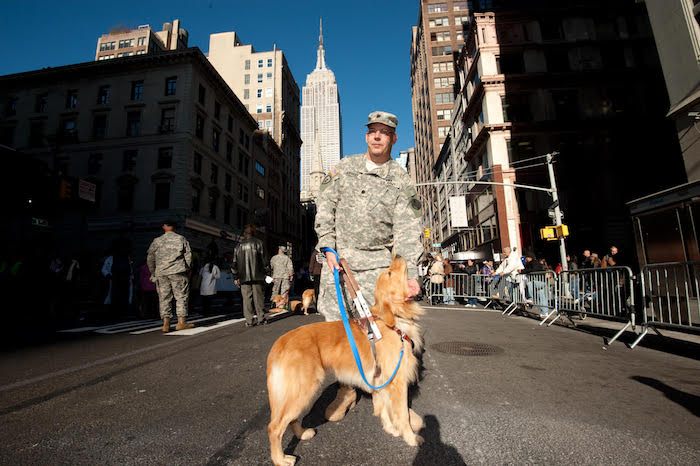 veteran service dog ptsd